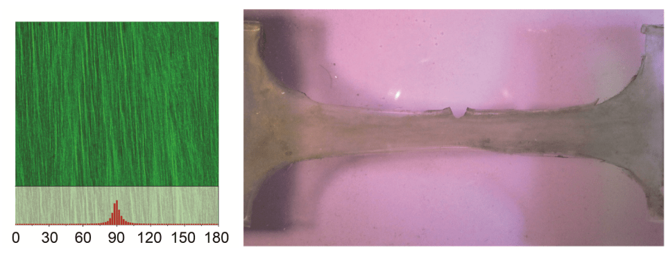 CellScale User Publication Highlight: Anti-fatigue-fracture Hydrogels