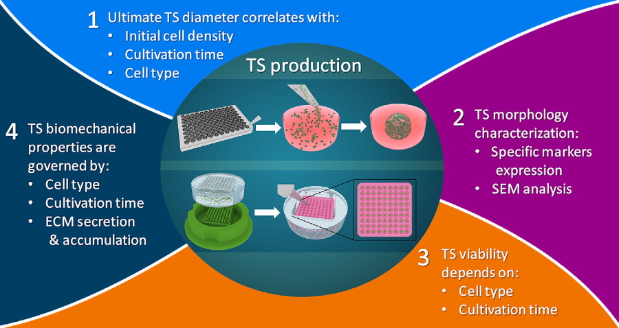 Multiparametric Analysis of Tissue Spheroids